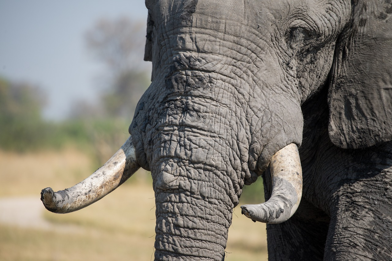Why Wildlife Traffickers are Escaping Justice